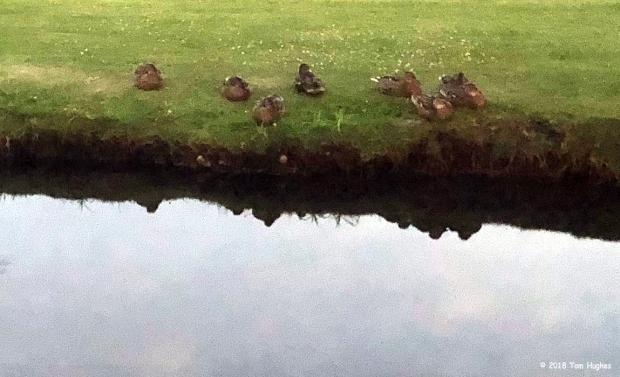 DucksHome